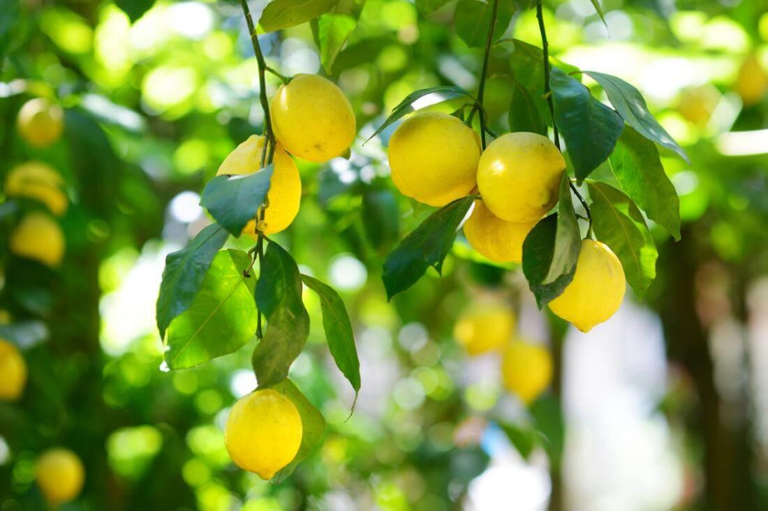 perfitimet nga limoni