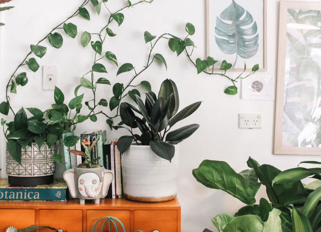 shtepi, bime, kuzhine, mbillni bime
